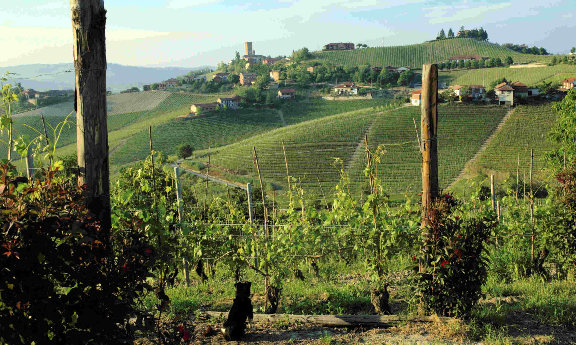 The Beauty of Barbaresco